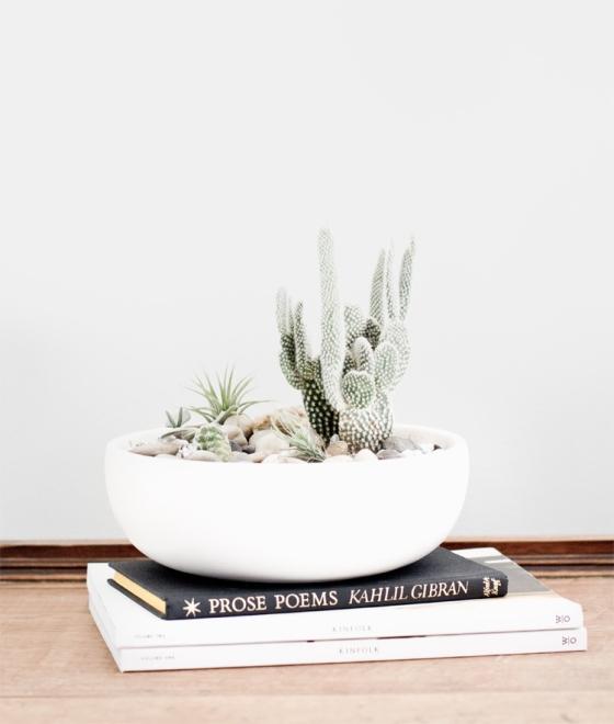 plants_4